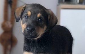 Животные ищут дом: котята и щенки в Гродно, в которых вы влюбитесь
