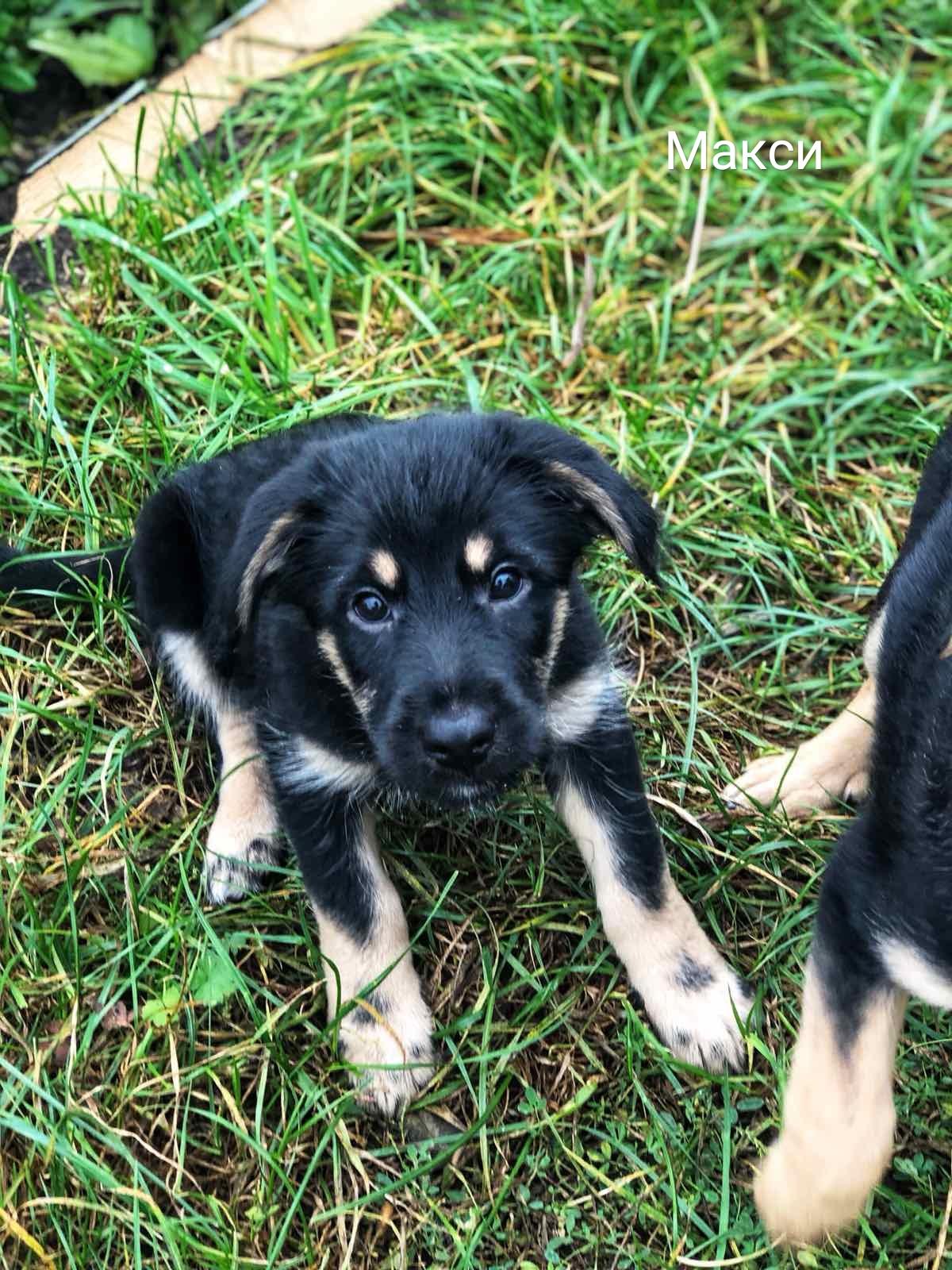 Животные ищут дом: собаки и кошки от 2 месяцев до 3 лет