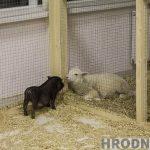 В Гродно закрывается контактный зоопарк: животных разыгрывают за лайки и репосты